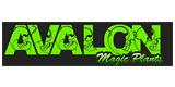 Codes Promo Avalon Magic Plants